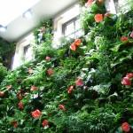 """Vườn trên tường – """" chiếc máy điều hòa xanh"""" cho cuộc sống của bạn"""