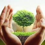 Babylon- chăm sóc sân vườn chuyên nghiệp