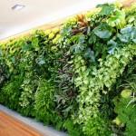 Dịch vụ chăm sóc vườn đứng chuyên nghiệp