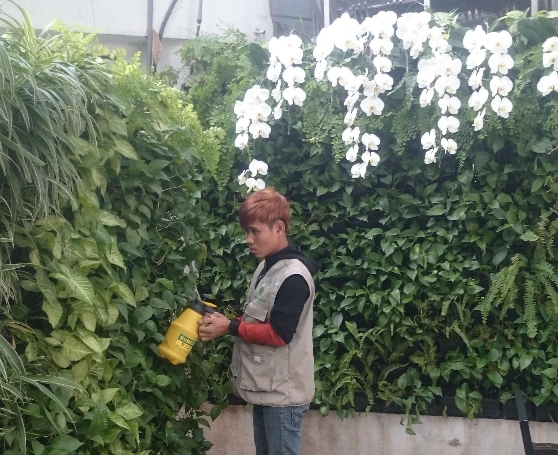 chăm sóc vườn đứng chuyên nghiệp