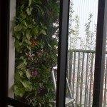 Vườn đứng ban công chung cư Hà Đô Park View – Cầu Giấy – Hà Nội