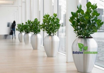 Dịch vụ cho thuê cây xanh văn phòng