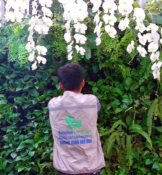 Vườn đứng kết hợp hoa Lan cho người yêu hoa