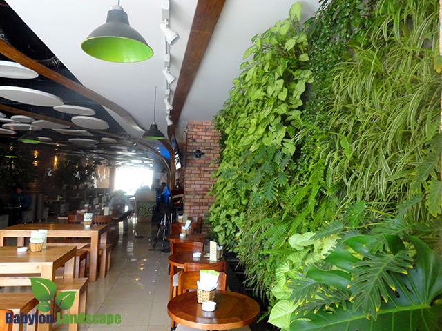 Vườn thẳng đứng trong nhà tại quán cà phê Hà Đông