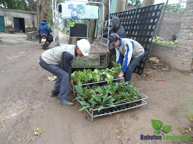 Thi công vườn đứng chuyên nghiệp với nguồn cây sản xuất riêng cho vườn đứng