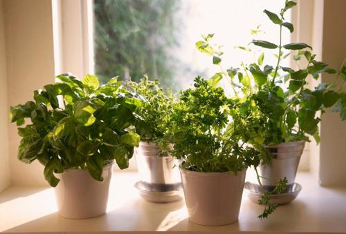 18 loại cây không thể thiếu trong vườn rau gia vị