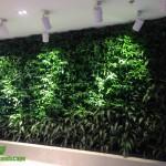 Cây trồng cho vườn tường nội thất