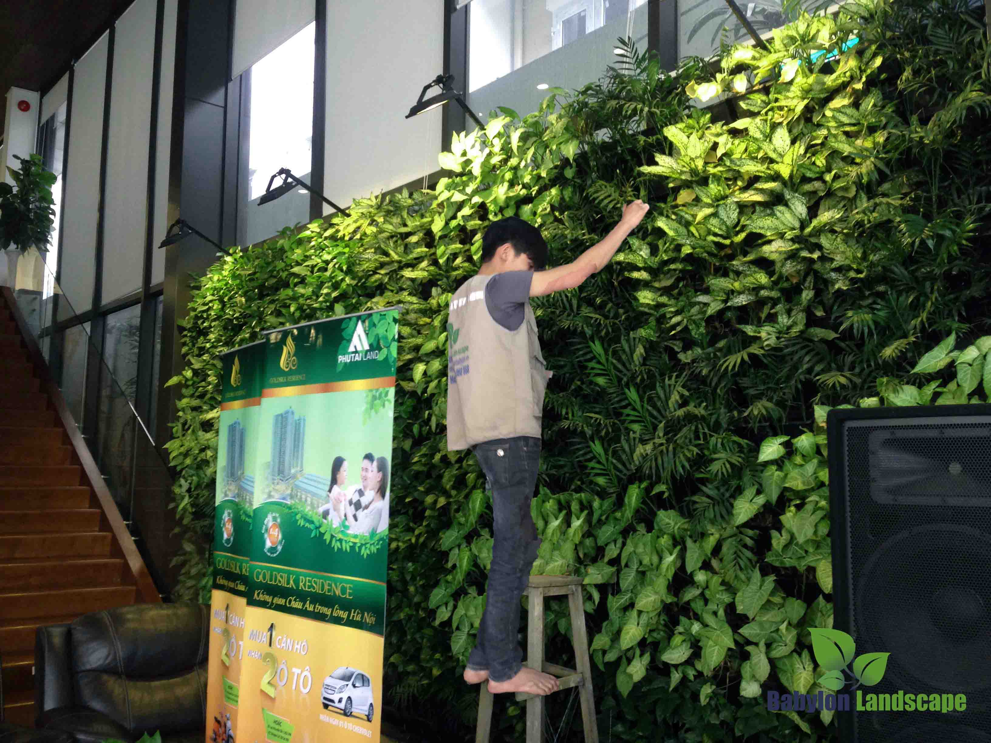 Chăm sóc vườn tường nhà mẫu