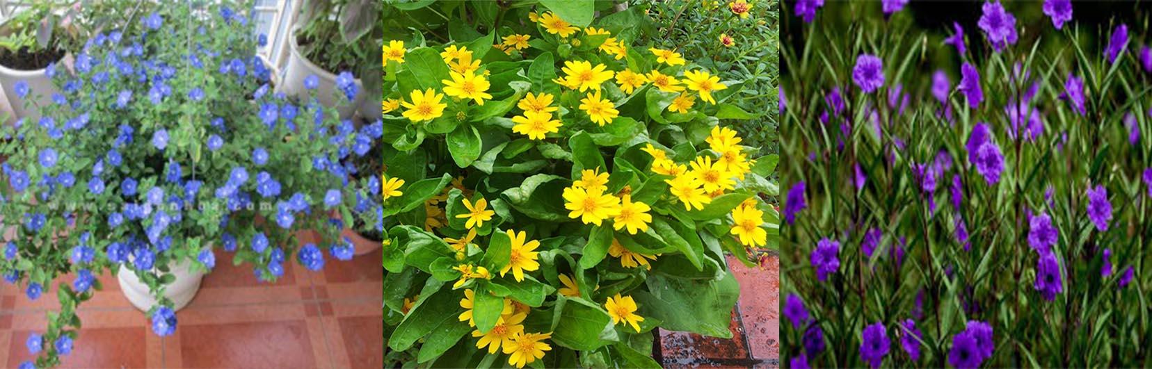 hoa theo mùa cho vườn tường