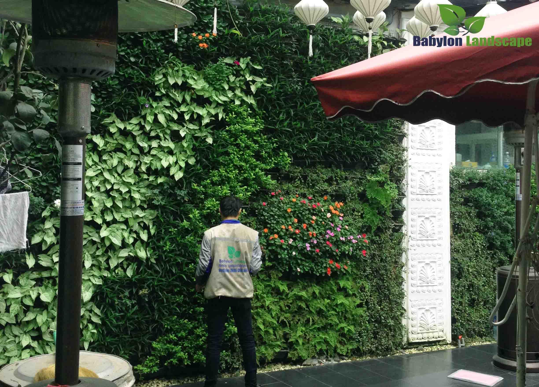 Chăm sóc vườn tường ngoài trời