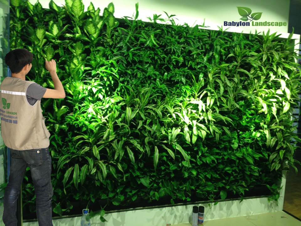 Chăm sóc vườn tường