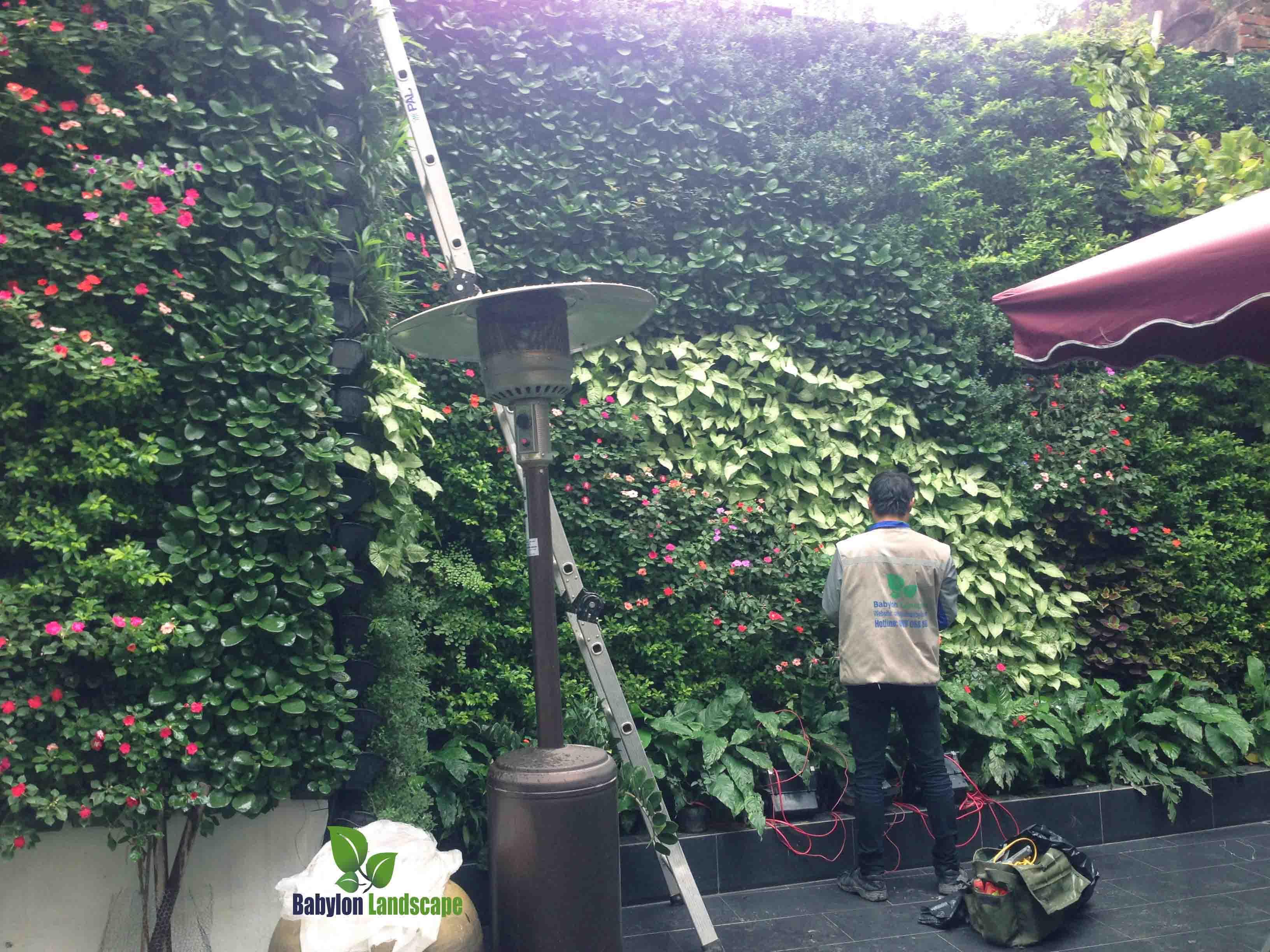 chăm sóc bảo trì vườn thẳng đứng
