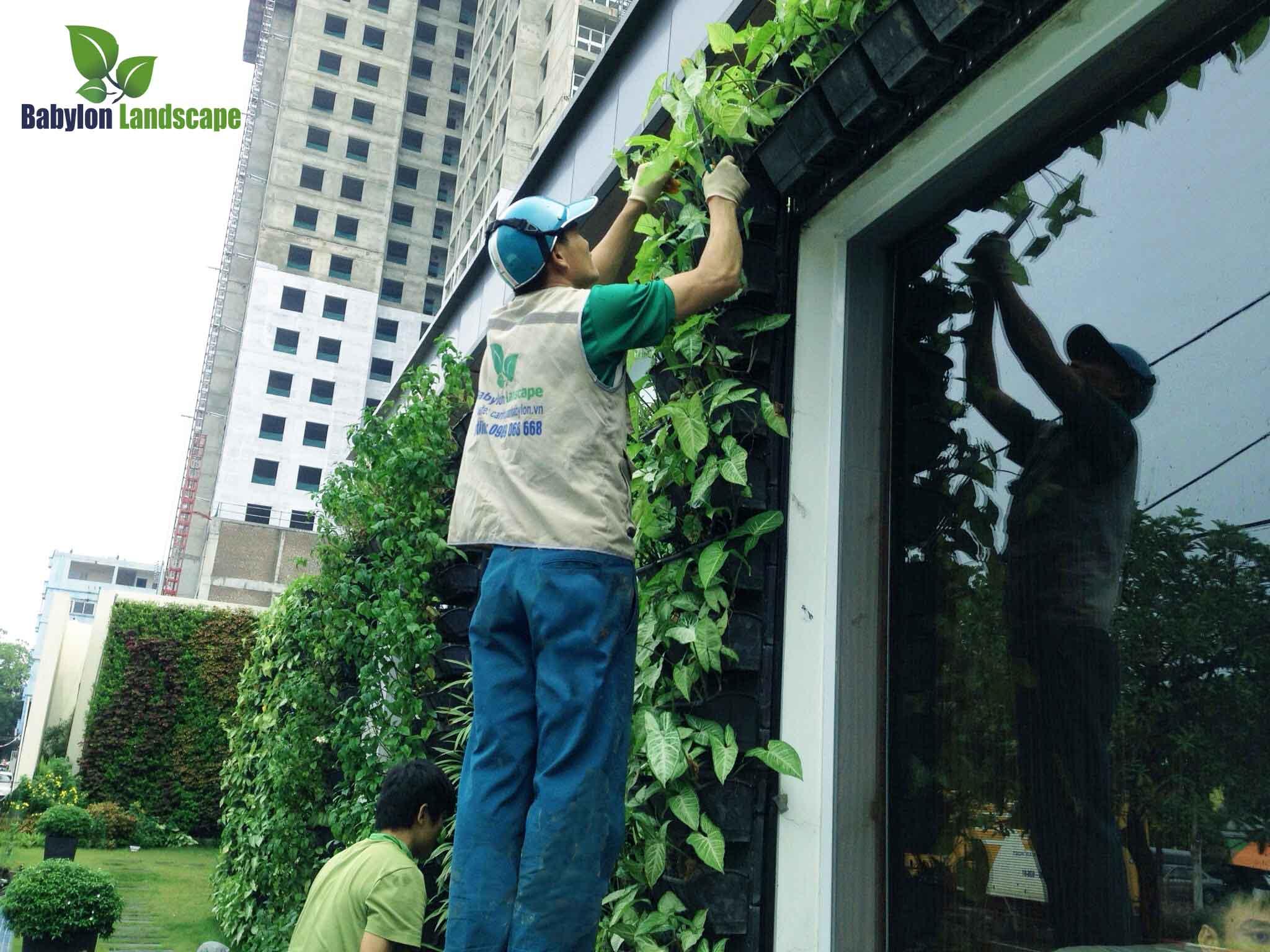 Chăm sóc bảo trì vườn đứng
