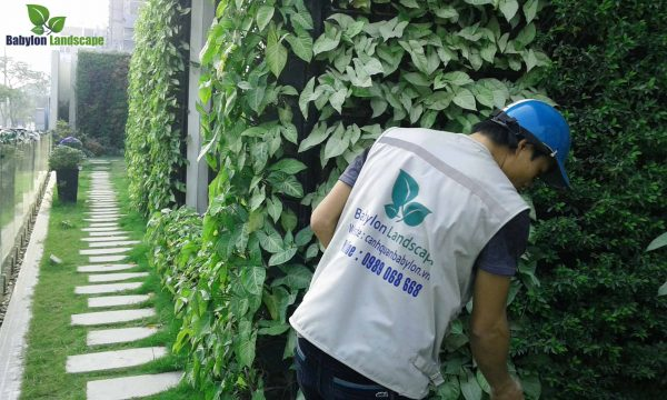 Vì sao khách hàng nên lựa chọn dịch vụ chăm sóc bảo trì vườn đứng