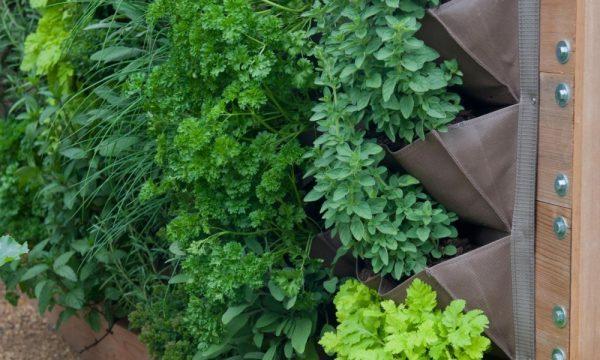 Vườn đứng thảo mộc – Bước tiến mới cho vườn thẳng đứng
