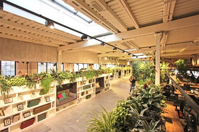 Top 10 Cây xanh văn phòng mang lại may mắn và thịnh vượng