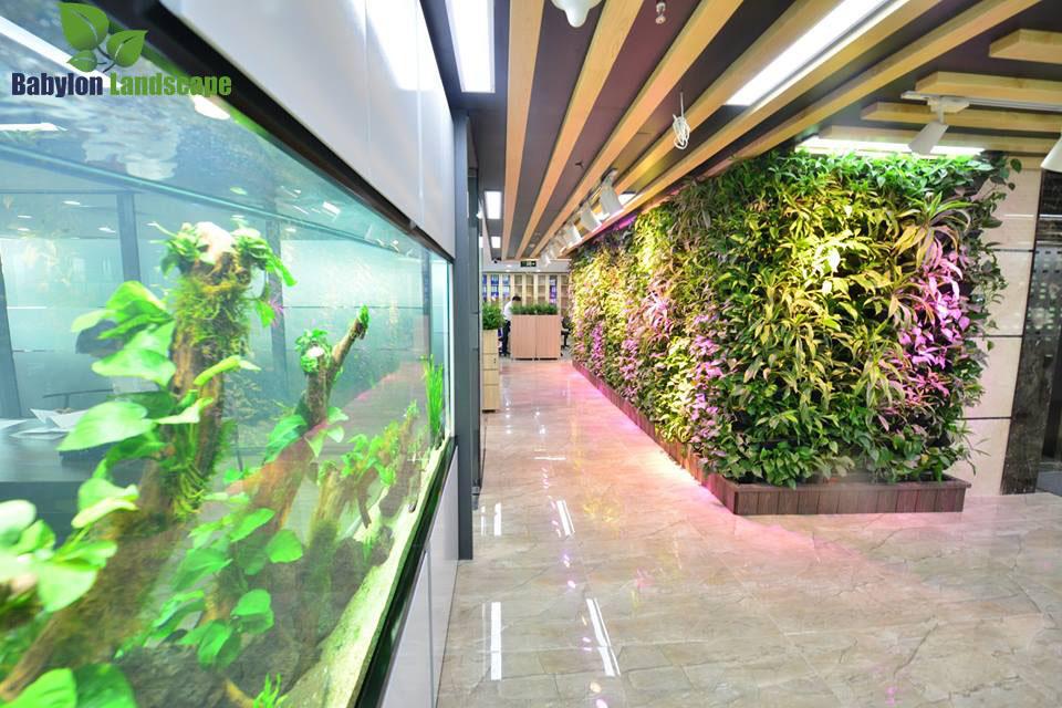 Hành lang đi lại – vườn tường – cây xanh văn phòng