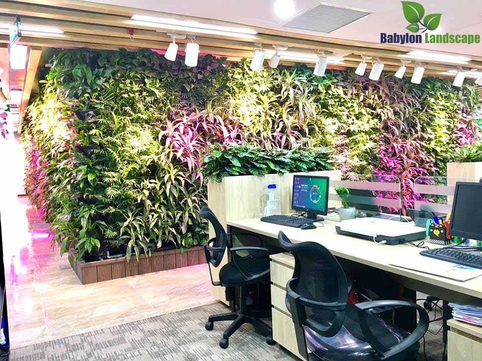 Vường tường, chậu cây xanh, cây nội thất