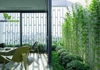 Vườn trên mái: Không gian mở trong phố cổ Hà Nội