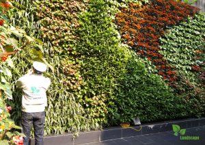 Nhân viên đang chăm sóc vườn đứng theo định kỳ