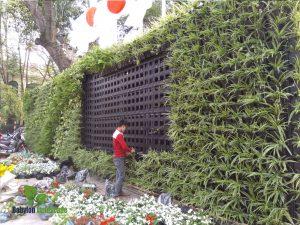 Thi công vườn tường xanh