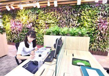 vườn trên tường mang lại không gian xanh