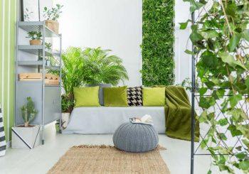 Vườn tường xanh trong nhà