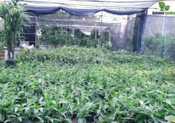 Vườn ươm là nguồn sống của những công trình vườn trên tường