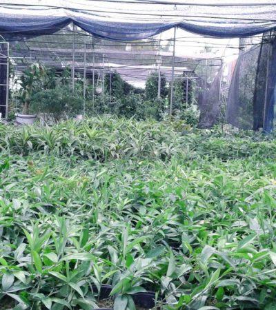 Vườn ươm Babylon tháng 6/2017 – Sẵn sàng cho những thành công mới