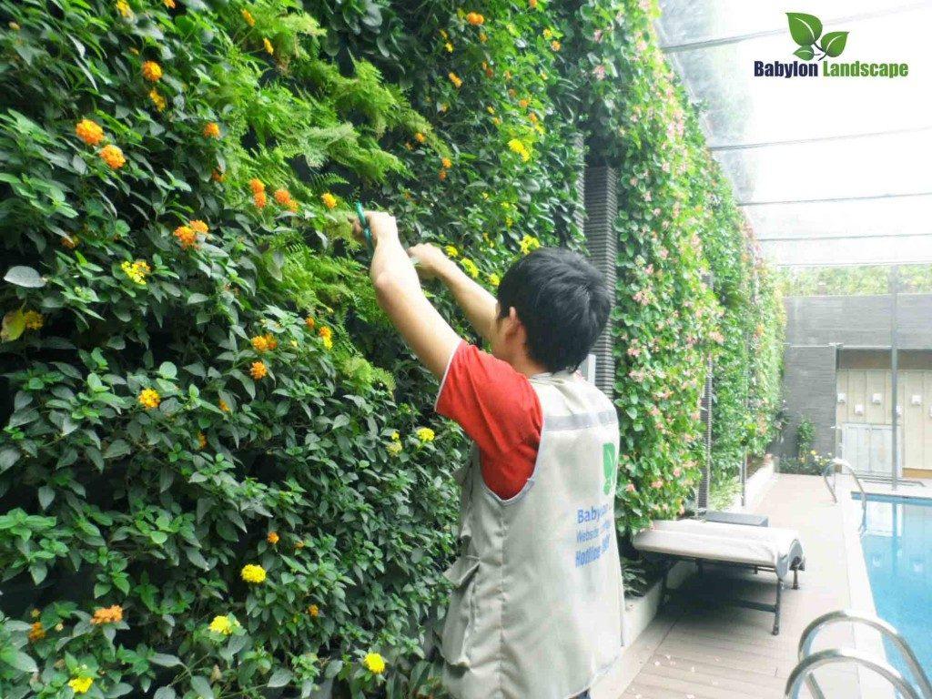 Thi công vườn đứng-vườn treo tường-tường cây xanh