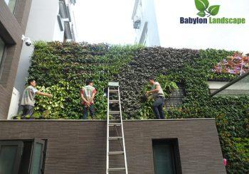 Nâng cao kỹ thuật thi công vườn tường chuyên nghiệp