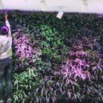 5 loại vật liệu làm vườn tường modul