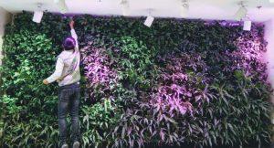 Đèn chiếu sáng - vật liệu làm vườn tường