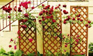 vườn tường sử dụng bằng vật liệu từ gỗ