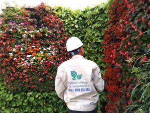 Trồng cây trên tường ngoài trời tại 24 Quang Trung - Hà Nội