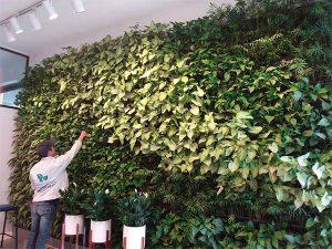 Chăm sóc thi công vườn đứng cây thật tại trường Quốc Tế Hà Nội