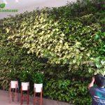 Thi Công Tường Cây Xanh Tại Trường Quốc Tế UNIS – Hà Nội