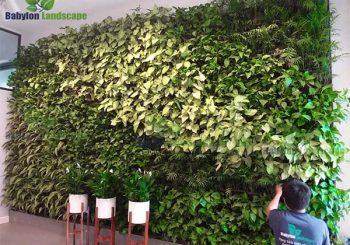 Thi công tường cây tại trường quốc tế UNIS - Ciputra - Hà Nội