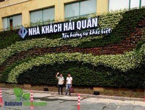 Thi công tường cây thật tại nhà khách Hải Quân - Hải Phòng