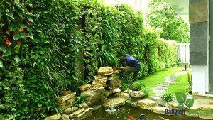 Thi công tường cây thật tại Việt Trì - Phú Thọ