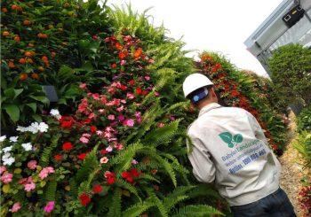 Ngọc Thảo - Cây trồng cho vườn thẳng đứng