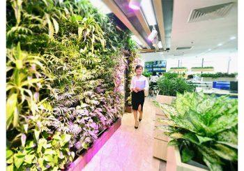 Thi công vườn đứng tại Hà Nội - Khu rừng xanh chốn công sở