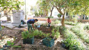 Cải tạo vườn cây thuốc nam bệnh viện y học cổ truyền Hà Nội