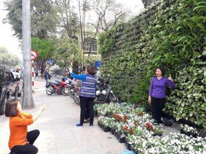 Khán giả hào hứng với công trình vườn thẳng đứng tại sự kiện lễ hội hoa anh đào