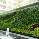 vườn tường xanh cho không gian phố