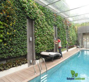 vườn tường xanh tại khu bể bơi Mỹ Đình II - Hà Nội