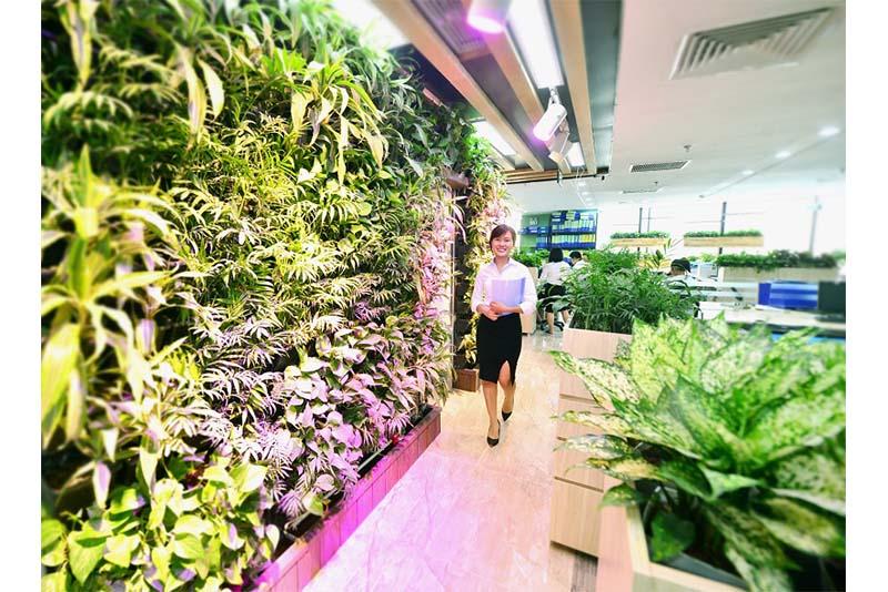 Vườn đứng – vườn trên tường cho văn phòng xanh