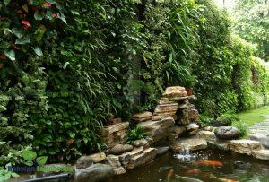 Thi công tường xanh kết hợp sân vườn biệt thự việt trì - Phú Thọ