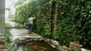 Chăm sóc bảo trì vườn cây theo định kỳ tại Phú Thọ