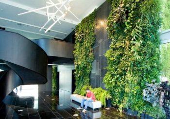 5 lý do để phát triển khu vườn tường nhà phố